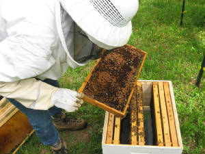 Managing the hives